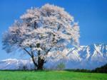 Япония   весна .png