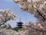Япония   весна  2.png