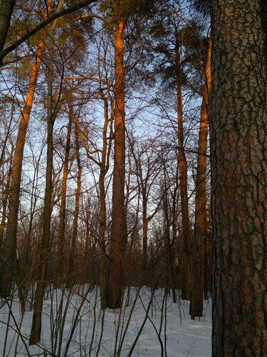 7. Смешанный лес