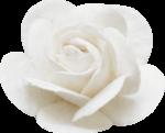 «ELEGANT»  0_813e5_2df60006_S