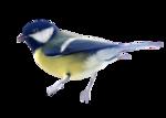 Птицы  разные  0_81efe_179f2c9c_S