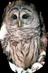Птицы  разные  0_81f05_e55aaa00_S
