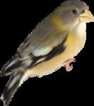 Птицы  разные  0_81f10_5ee91a16_S