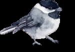 Птицы  разные  0_81f14_661b2479_S