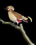 Птицы  разные  0_81f25_b42c1f4c_S