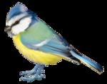 Птицы  разные  0_81f29_97affd5_S