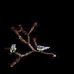 Птицы  разные  0_81f34_67cd905a_S