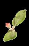 «PeachFacedLovebird» 0_82156_ceddd8e_S