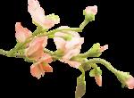 «PeachFacedLovebird» 0_8217a_d06ff075_S