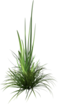 mzimm_signsofspring_grass.png