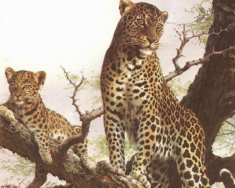 Скачать обои животные, леопард на дереве, Carl Brenders 800x600.