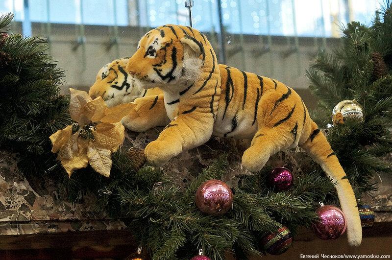 Зима. Большой Московский цирк. 22.12.15.08..jpg