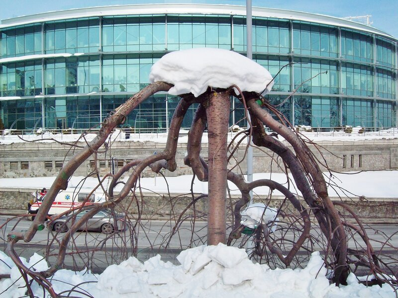 Дерево парка Славы зимой