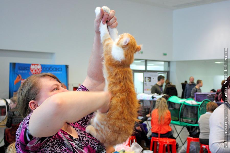 А так обрабатывают кошек антистатиком