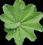MRD_Toe-Tally-Faerie-leaf(3).png