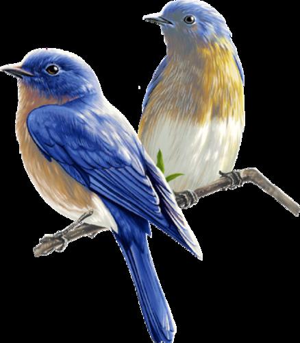 Ptice..... 0_dac33_fbc154f7_L