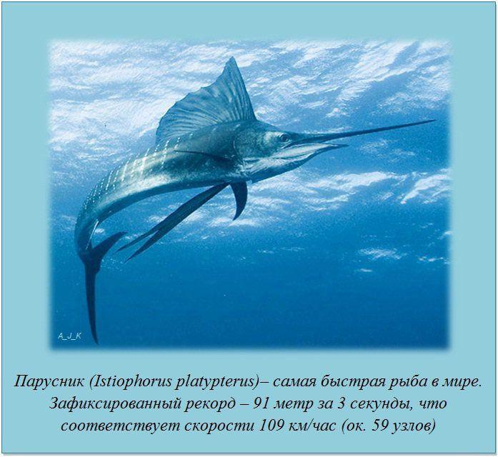http://img-fotki.yandex.ru/get/6201/130422193.e8/0_76042_103e36c7_orig