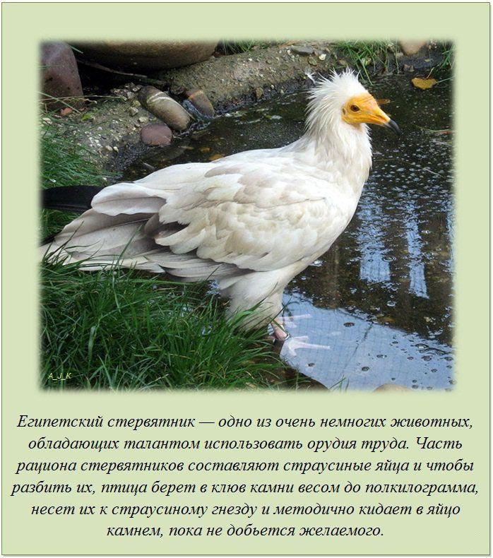 http://img-fotki.yandex.ru/get/6201/130422193.e8/0_7605e_c24090e1_orig