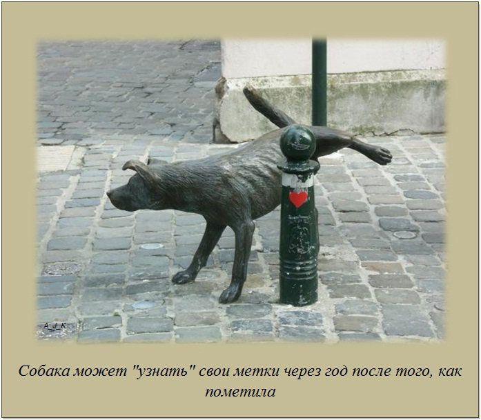 http://img-fotki.yandex.ru/get/6201/130422193.e9/0_76064_3a987a9_orig