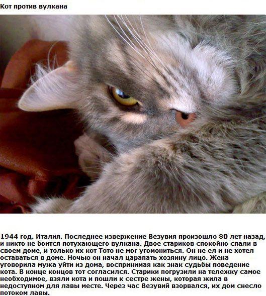 http://img-fotki.yandex.ru/get/6201/130422193.ea/0_76155_31a932e2_orig