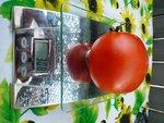 Помидор, томат сорт Реликвия из Уссурийска