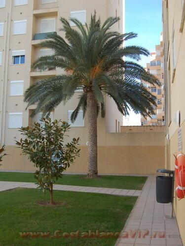 квартира в Gandia, квартира в Гандии, квартира на пляже в Испании, апартаменты на пляже, апартаменты в Испании, недвижимость в Испании, Коста Бланка, CostablancaVIP