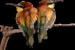 Птицы  разные  0_81f08_7abd795b_S