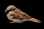Птицы  разные  0_81f0c_4b9e6456_S