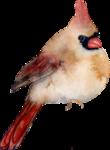 Птицы  разные  0_81f15_55b24aa9_S
