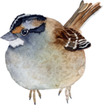 CreatewingsDesigns_FF_Bird3.png