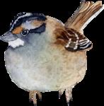 Птицы  разные  0_81f16_6786dfc4_S