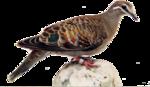 Птицы  разные  0_81f2b_66a02516_S