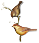 mzimm_signsofspring_birds_sh.png