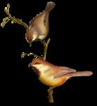 Птицы  разные  0_81f32_97788d49_S