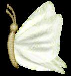 «PeachFacedLovebird» 0_82167_8ecba043_S