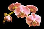 «PeachFacedLovebird» 0_82178_41bb84d9_S