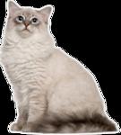 кошки,пнг,котята,коты,животные,