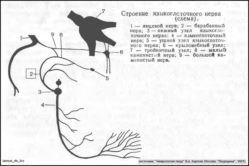 Нерв двигательный