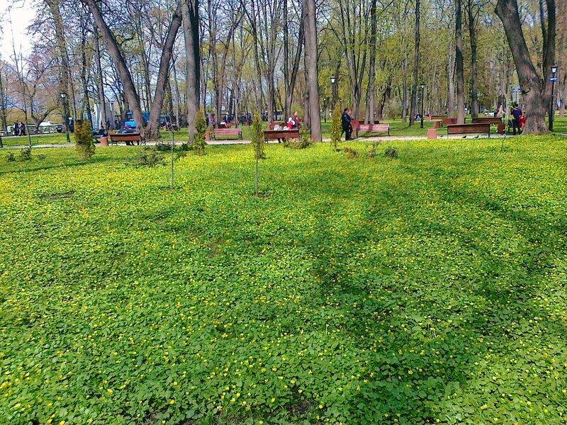 Цветочная лужайка