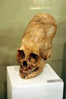 10 фальшивых черепов