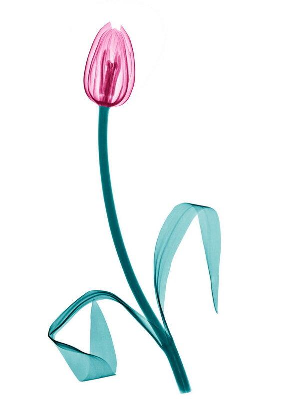 Цветы в рентгеновских лучах Brendan Fitzpatrick