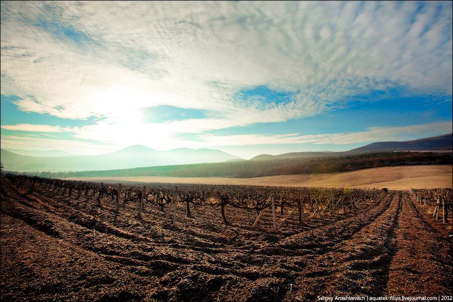 Весна на виноградниках