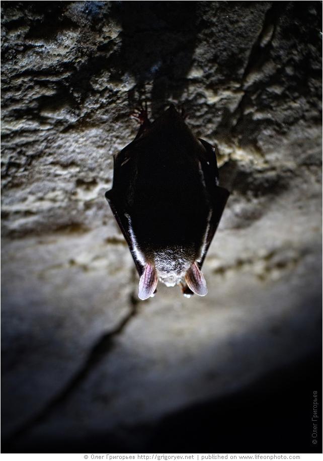 Пещеры Млынки