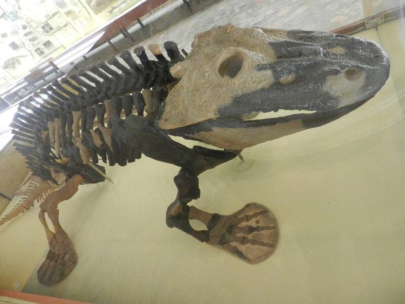 Палеонтологический музей Москвы