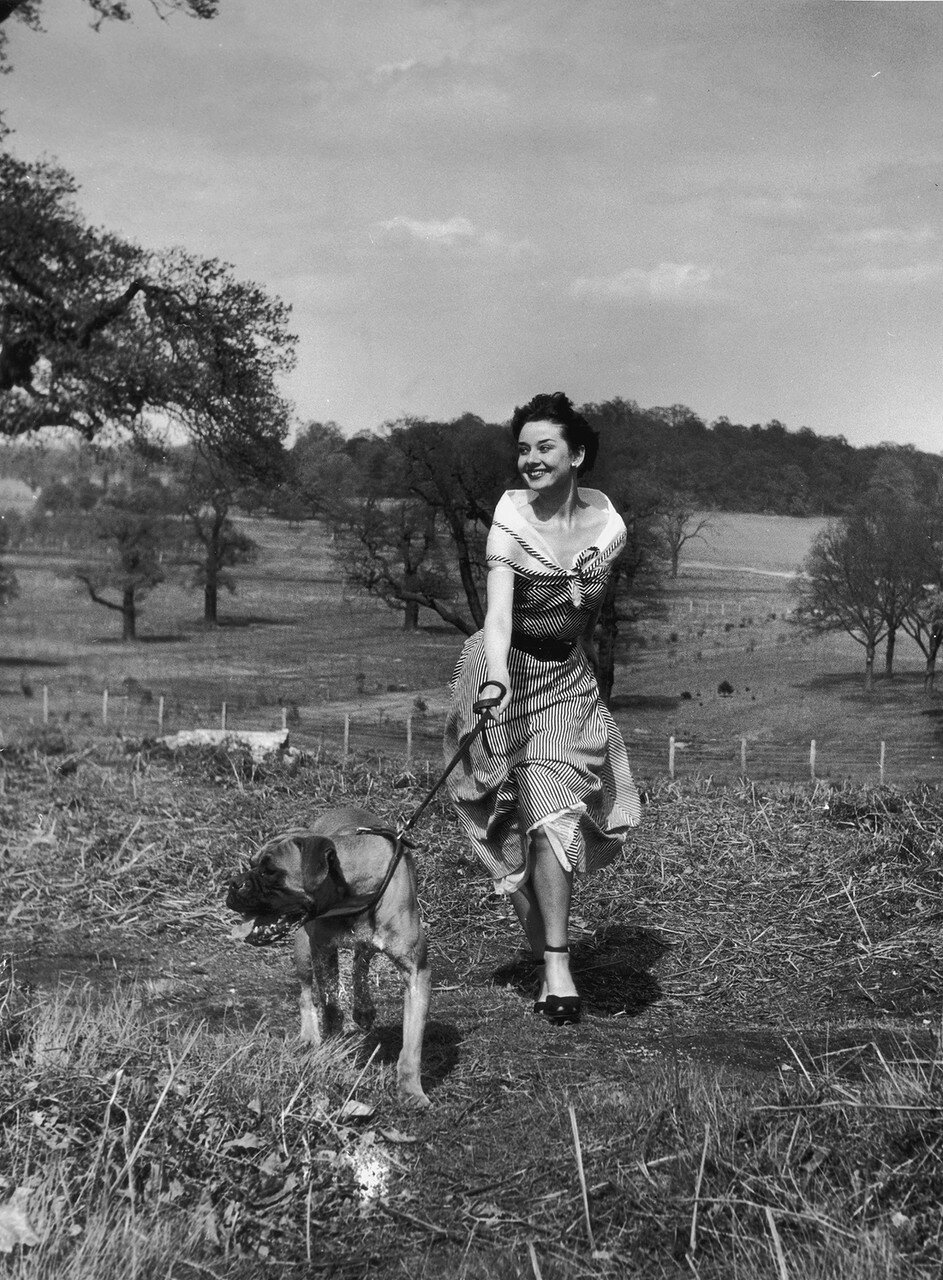 Actress Audrey Hepburn (1929 - 1993) exercising her dog in Richmond Park after a strenuous season in the London revue 'Sauce Piquante', 13th May 1950. Picture Post - 5035 - We Take A Girl To Look For Spring - pub. 1950 (Photo by Bert Hardy/Hulton Archive/