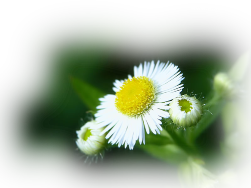http://img-fotki.yandex.ru/get/6202/106854303.7f/0_7a525_dcd03856_L.png