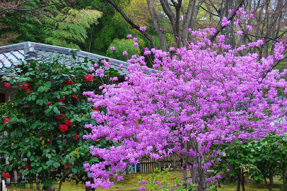Фото деревьев с белыми цветами