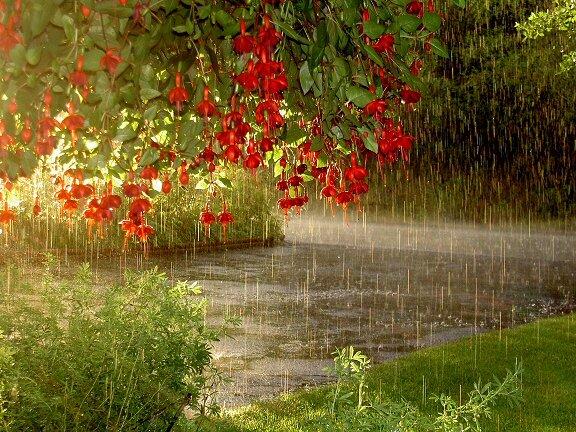 """Схема вышивки  """"Летний дождь """" ."""