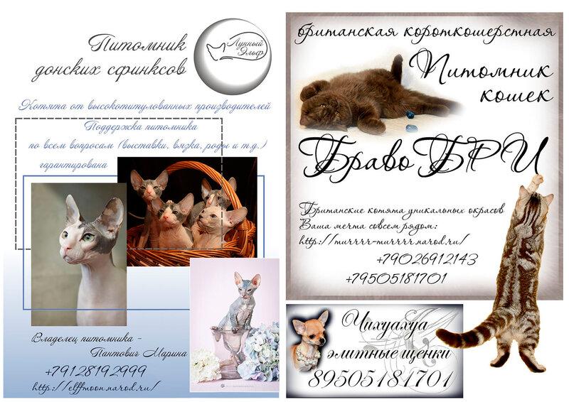 http://img-fotki.yandex.ru/get/6202/123262551.3/0_70026_92934d37_XL.jpg
