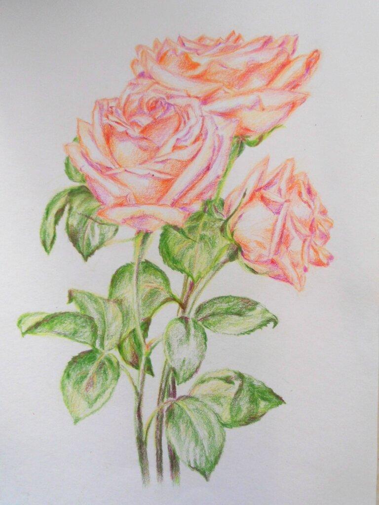 Розовые розы)